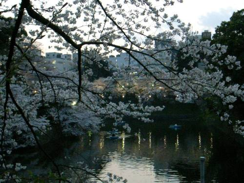 Sakura1_1