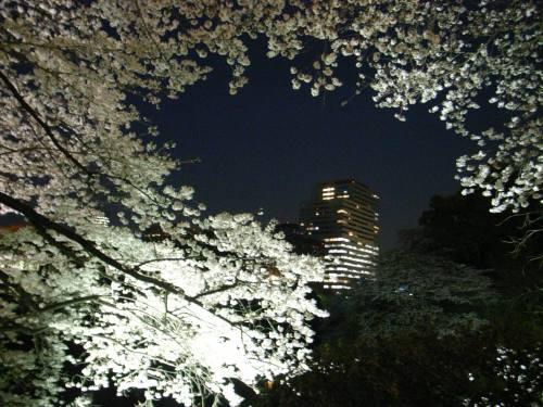 Sakura5_1