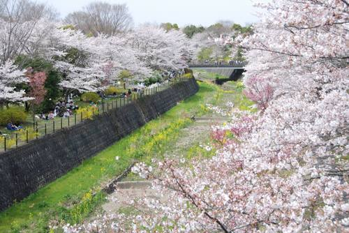 Sakura7_1