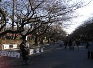 Sakurabunbi_1